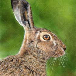 Giclee Watercolour Print of a Hare by Paul Hopkinson