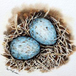Blackbird eggs in watercolor