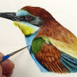 Bee-eater by Paul Hopkinson, wildlife artist