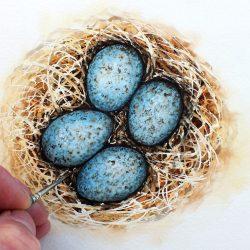 Blackbird eggs in watercolour