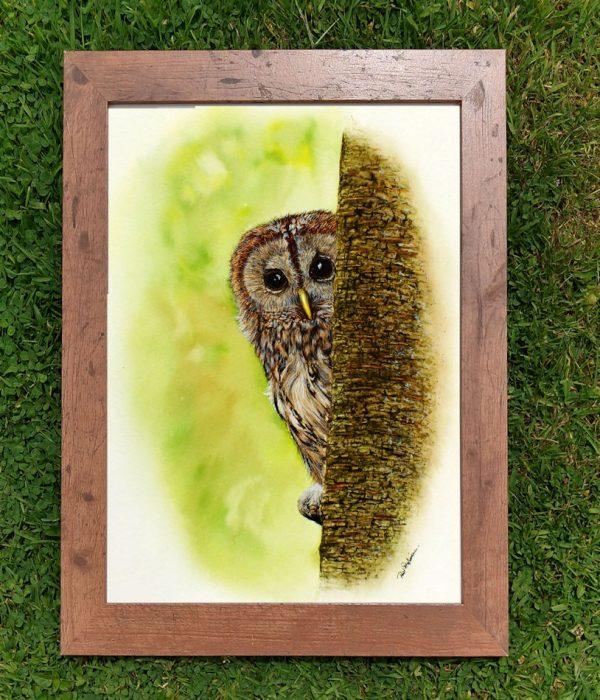 Framed watercolor owl illustration by Paul Hopkinson