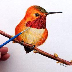 Hummingbird watercolour painting by Paul Hopkinson, wildlife artist and online art tutor