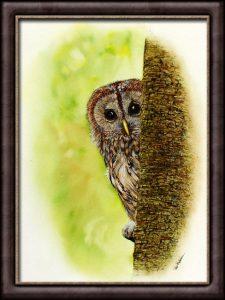 Original Watercolour Owl Painting - Tawny Owl Illustration
