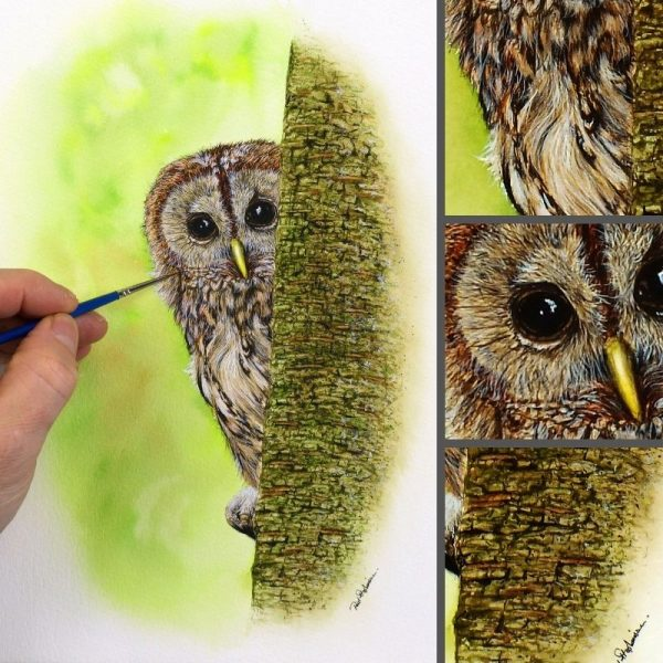 Owl painted in watercolor by Paul Hopkinson, image showing the fine art detail