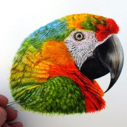 Fine art detail within a parrot watercolour painting