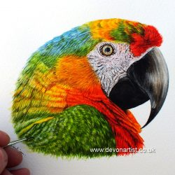 Parrot in watercolour