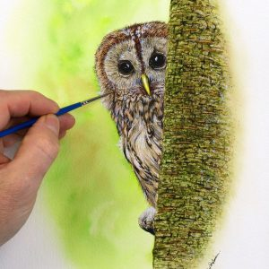 Paul Hopkinson painting a realistic tawny owl illustration