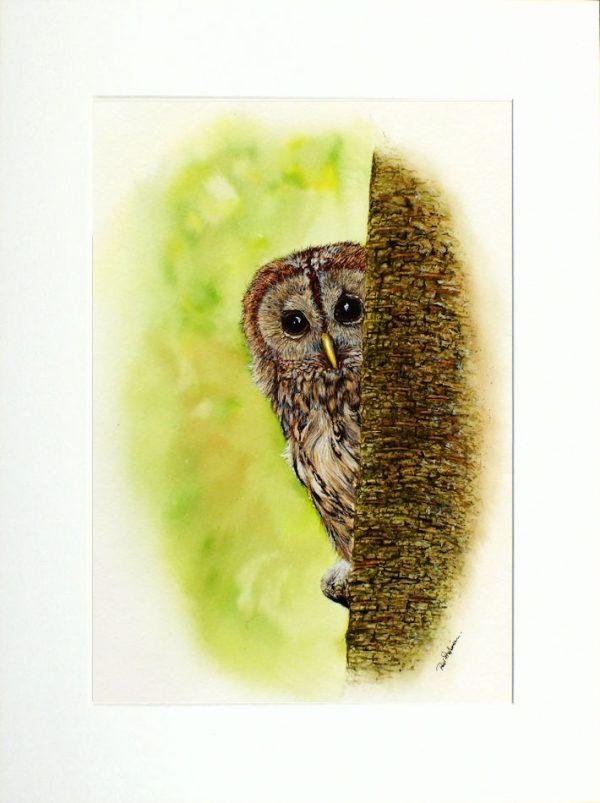 Paul Hopkinson wildlife artist and online art tutor, watercolour owl painting