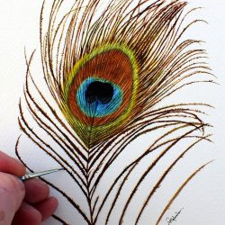 Peacock feather painted in watercolour