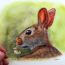 Paul Hopkinson, The Devon Artist, watercolour painting of a rabbit
