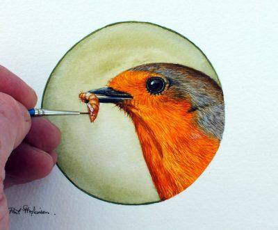 Watercolour robin study by Paul Hopkinson