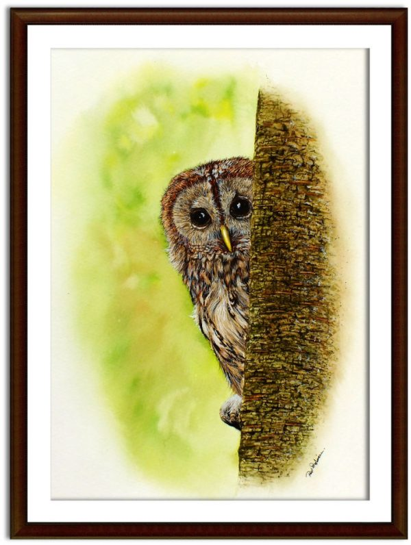 Watercolor owl painting by Paul Hopkinson, shown framed