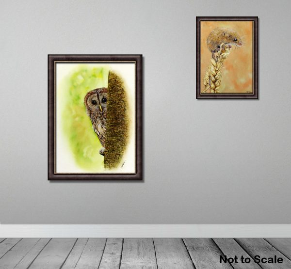 Watercolour painted tawny owl by Paul Hopkinson, shown framed on a wall