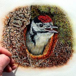 Watercolour Bird Painting Tutorial - Fine Art PDF