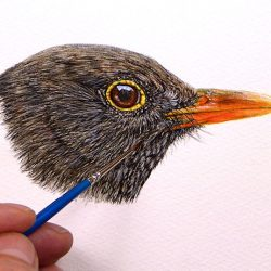 Female blackbird painted in fine detailed watercolour