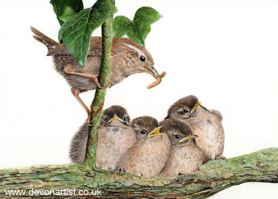 Watercolour painting of a family of wrens