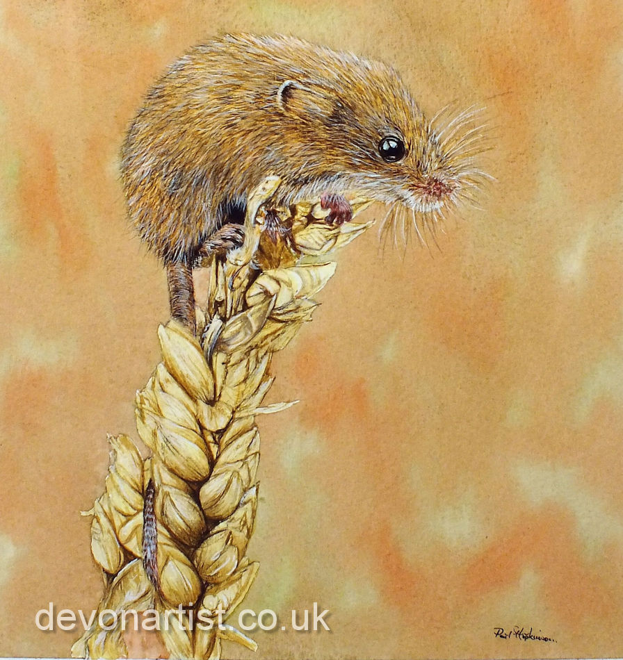 Watercolour painting of a harvest mouse by The Devon Artist