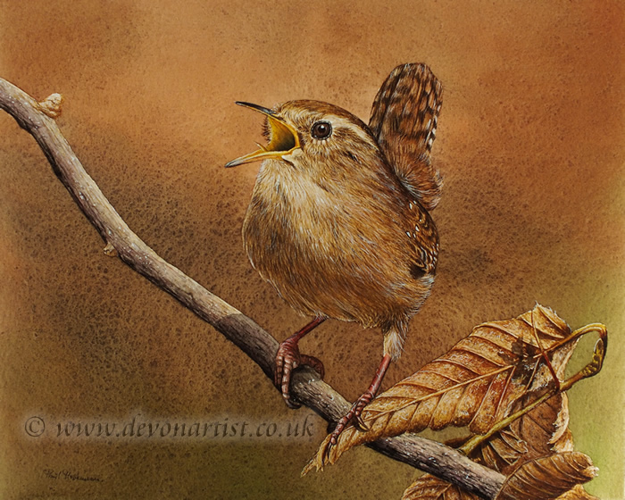 Watercolour painting of a singing wren