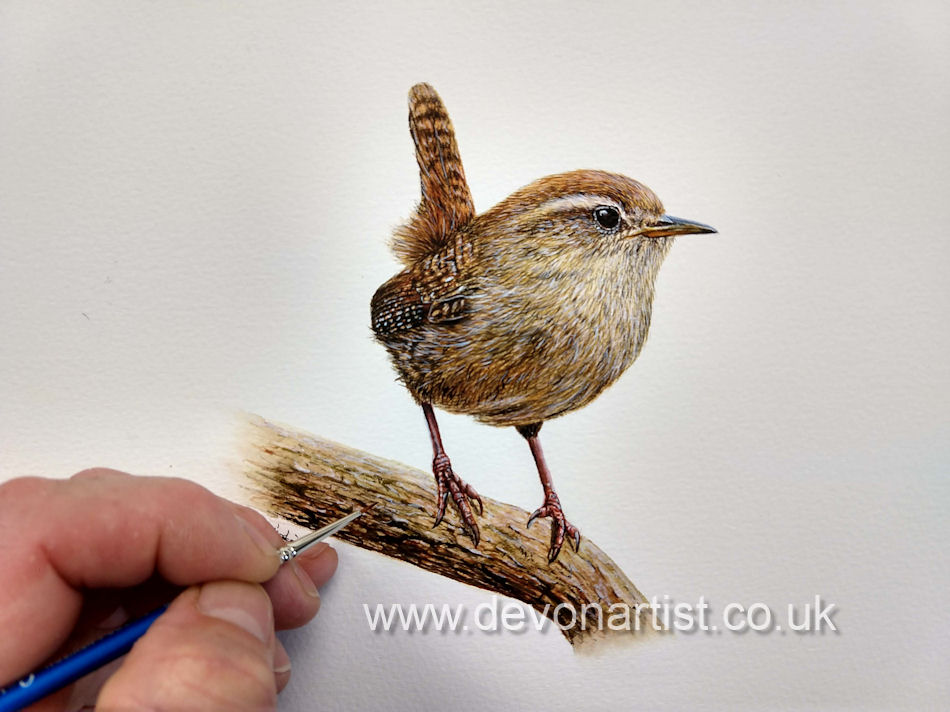 Watercolour painting of a wren by Paul Hopkinson
