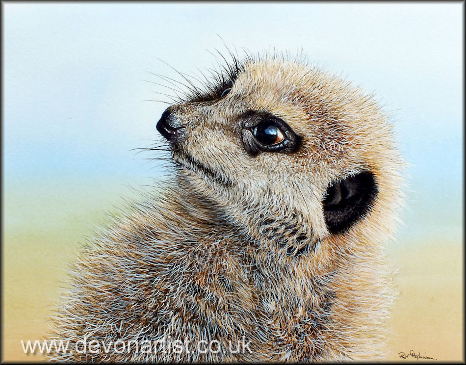 Meerkat in watercolour by Paul Hopkinson, a great example of opaque white in use.
