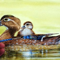 Wood ducklings painted in watercolour by Paul Hopkinson