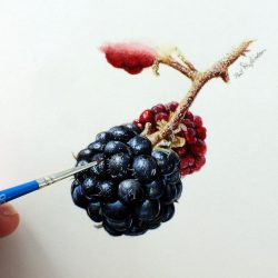 Blackberry watercolour painting by Paul Hopkinson