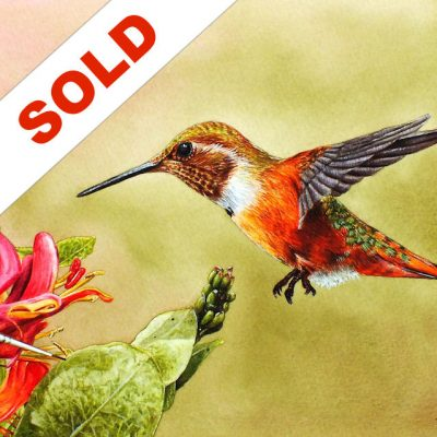 Hummingbird Watercolor Sold