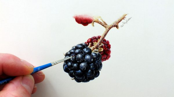 Paul Hopkinson painting realistic fruit in watercolour