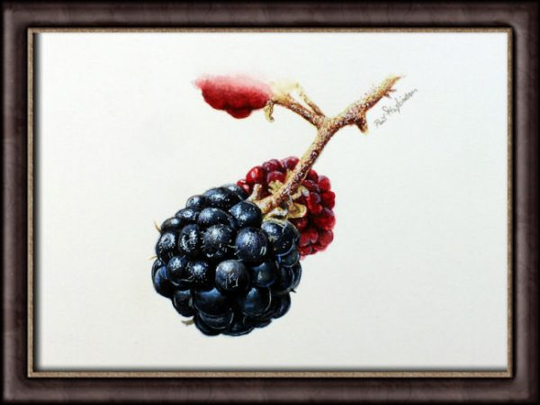 Watercolour painting of fruit by Paul Hopkinson photographed in a frame