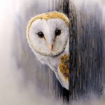 Barn Owl by artist Paul Hopkinson
