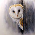 Barn Owl by artist Paul Hopkinson