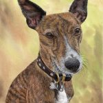 Buddy by artist Paul Hopkinson