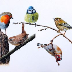 Garden Birds Watercolour Painting, Original Fine Art