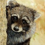 Raccoon by artist Paul Hopkinson