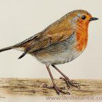 Robin Watercolour Tutorial