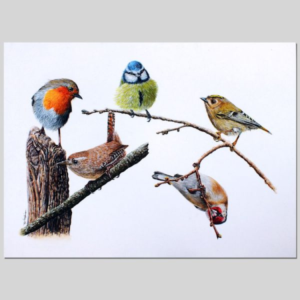British Garden Birds in Watercolour by Paul Hopkinson