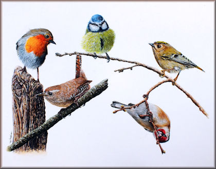 Paint British Birds in Watercolour with 5 PDF step by step tutorials
