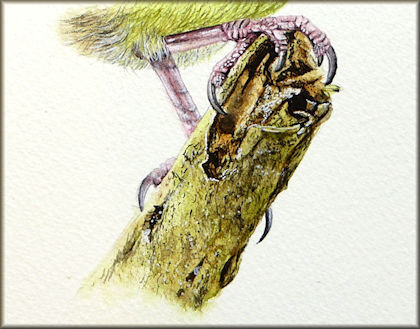 How to paint bark in watercolour with Paul Hopkinson. Button takes you to the tutorial.