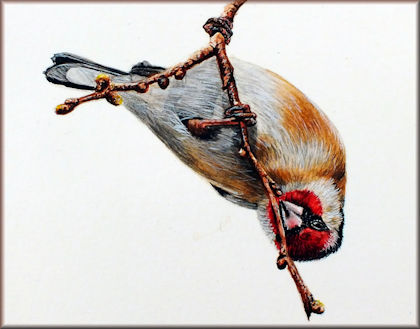How to paint a Goldfinch in watercolour button linking to the video tutorial