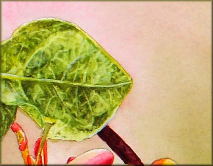 How to paint a leaf in watercolour, click the button for the tutorial