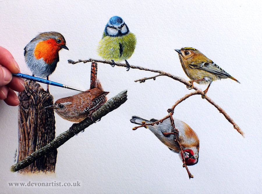 Garden-bird-watercolour-painting-by-Paul-Hopkinson