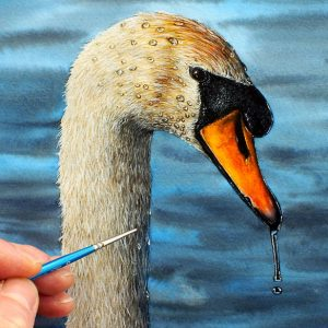 Swan in watercolour being painted by Paul Hopkinson