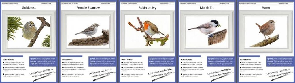 Watercolour Bird PDF Tutorials - Set 1 British Garden Birds