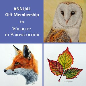 Annual gift membership to Wildlife in Watercolour with Paul Hopkinson
