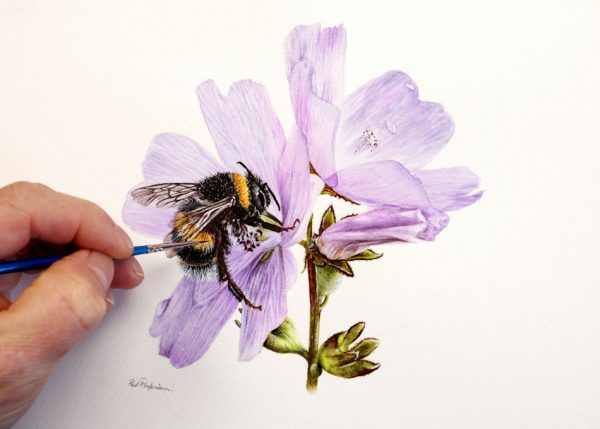 Bumble Bee being painted in watercolour by Paul Hopkinson