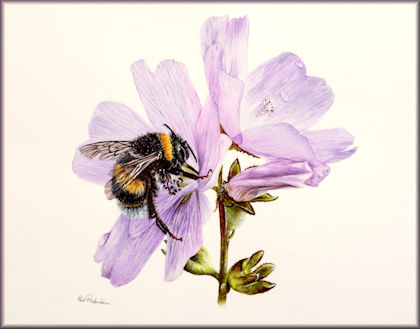 Bumble Bee in watercolor by Paul Hopkinson button link to the tutorial