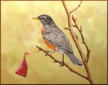 Button to all the videos linked to the American Robin watercolour tutorial