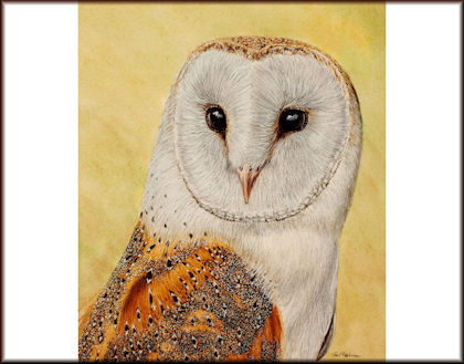 Button to all the videos linked to the Barn Owl watercolour tutorial
