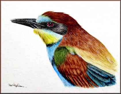 Button to all the videos linked to the Bee-eater watercolour tutorial
