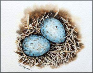 Original Bird Egg Watercolour Painting ~ Blackbird Nest